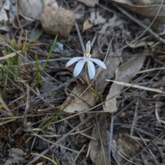 Unidentified Orchid (TBC) at Canyonleigh, NSW - 3 Oct 2019 by Margot