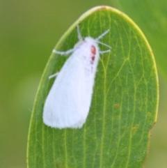 Unidentified Moth (TBC) at Batemans Marine Park - 5 Oct 2019 by LisaH