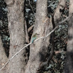 Todiramphus sanctus (Sacred Kingfisher) at Jerrabomberra Wetlands - 7 Oct 2019 by Tim L