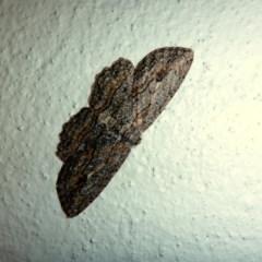 Ectropis excursaria (Common Bark Moth) at Aranda, ACT - 7 Jul 2015 by JanetRussell