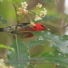 Myzomela sanguinolenta (Scarlet Honeyeater) at Ulladulla - Millards Creek - 19 Sep 2019 by Charles Dove