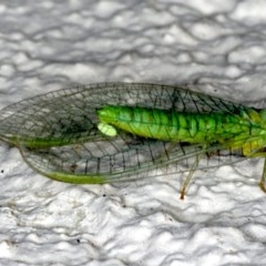 Mallada signata (A Green Lacewing) at Ainslie, ACT - 21 Sep 2019 by jbromilow50