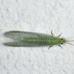 Mallada signata (A Green Lacewing) at Ainslie, ACT - 29 Oct 2019 by jbromilow50