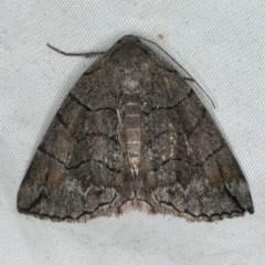 Dysbatus stenodesma (Arc Line-moth) at Rosedale, NSW - 15 Nov 2019 by jbromilow50