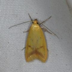 Aeolothapsa malacella (Aeolothapsa malacella) at Rosedale, NSW - 15 Nov 2019 by jbromilow50