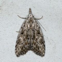 Nola vernalis (Dagger Tuft Moth) at Rosedale, NSW - 16 Nov 2019 by jbromilow50