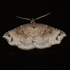 Lithilaria ossicolor (Bone Moth) at Rosedale, NSW - 16 Nov 2019 by jbromilow50