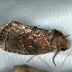 Elusa semipecten (A Noctuid moth) at Rosedale, NSW - 15 Nov 2019 by jbromilow50