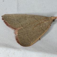 Ocrasa acerasta (A Pyralid moth) at Rosedale, NSW - 15 Nov 2019 by jbromilow50