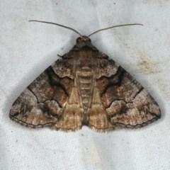 Dysbatus singularis (Line Moth) at Rosedale, NSW - 15 Nov 2019 by jbromilow50