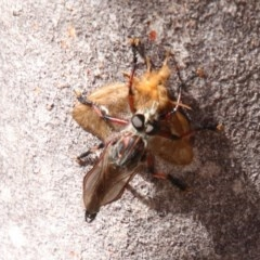 Unidentified Insect (TBC) at - 30 Sep 2018 by JanHartog