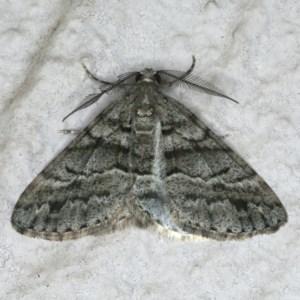 Lipogya eutheta at Ainslie, ACT - 9 Jan 2020