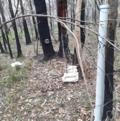 Watering point stored at Bomaderry Creek Bushcare - 8 Jan 2020 by 2020Shoalhaven