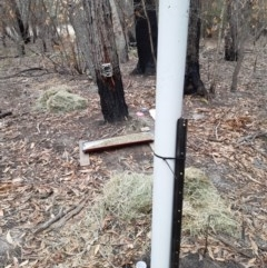 Watering point stored at Kioloa, NSW - 9 Jan 2020 by 2020Shoalhaven