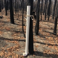 Watering point stored at Little Forest, NSW - 26 Jan 2020 by IanS
