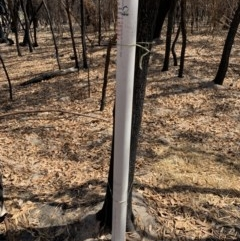 Watering point stored at Bendalong, NSW - 31 Jan 2020 by PatB