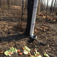 Watering Station at Boyne State Forest - 4 Feb 2020 by Kyliey