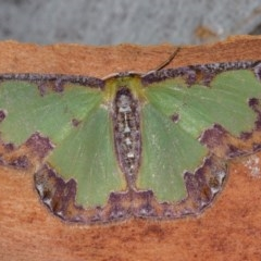 Eucyclodes buprestaria (Bordered Emerald) at Black Mountain - 11 Dec 2017 by Thommo17