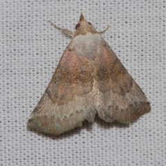 Mataeomera mesotaenia (Mini Owlet Moth) at Black Mountain - 24 Jan 2018 by Thommo17