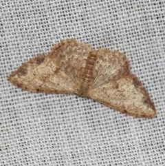 Idaea halmaea (Two-spotted Wave) at Namadgi National Park - 7 Feb 2019 by ibaird