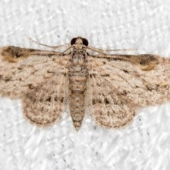 Chloroclystis insigillata (Insigillated Carpet) at Melba, ACT - 18 Mar 2018 by Bron