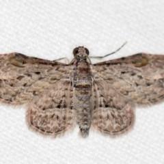 Chloroclystis insigillata (Insigillated Carpet) at Melba, ACT - 2 Nov 2018 by Bron
