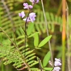 Glycine microphylla (Small-leaf Glycine) at Jervis Bay National Park - 1 Mar 2020 by NicholasdeJong