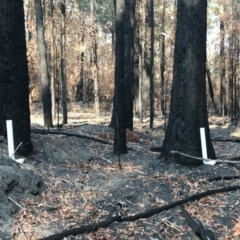Watering Station at Woodburn State Forest - 30 Jan 2020 by Simon Tedder