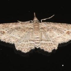 Chloroclystis filata (Filata Moth, Australian Pug Moth) at Ainslie, ACT - 9 Mar 2020 by jbromilow50