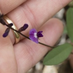Glycine tabacina (Variable Glycine) at Illilanga & Baroona - 6 Mar 2020 by Illilanga