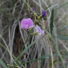 Glycine clandestina (Twining glycine) at Tuggeranong Hill - 23 Mar 2020 by Owen