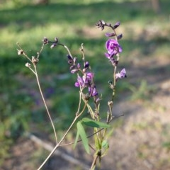 Glycine clandestina (Twining glycine) at Red Hill Nature Reserve - 20 Mar 2020 by JackyF