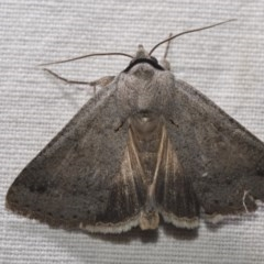 Pantydia sparsa ( A noctuid moth) at Black Mountain - 14 Apr 2018 by GlennCocking