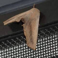 Monoctenia smerintharia (Dark Leaf Moth) at Higgins, ACT - 31 Mar 2020 by AlisonMilton