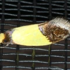 Edosa xystidophora (Edosa xystidophora) at Lilli Pilli, NSW - 31 Mar 2020 by jbromilow50