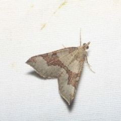 Anachloris uncinata (Hook-winged Carpet) at Black Mountain - 17 Apr 2018 by melanoxylon
