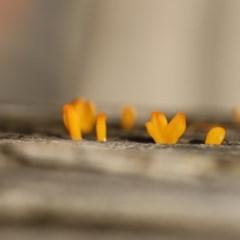 Unidentified Fungus, Moss, Liverwort, etc (TBC) at Quaama, NSW - 10 Apr 2020 by FionaG