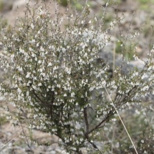 Leucopogon fletcheri subsp. brevisepalus at Illilanga & Baroona - 13 Oct 2018