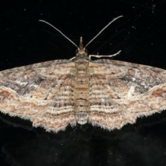 Chloroclystis filata (Filata Moth, Australian Pug Moth) at Ainslie, ACT - 25 Apr 2020 by jbromilow50
