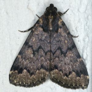 Mormoscopa phricozona at Ainslie, ACT - 29 Apr 2020