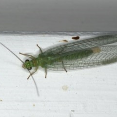 Mallada signata (A Green Lacewing) at Ainslie, ACT - 9 Dec 2019 by jbromilow50