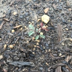 Unidentified Plant (TBC) at - 8 Feb 2020 by Caz_well1987