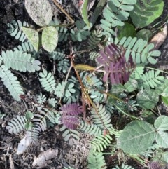 Unidentified Wattle (TBC) at FS Private Property - 18 May 2020 by Stewart