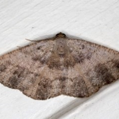 Casbia sp. (genus) (A Geometer moth) at Ainslie, ACT - 18 May 2020 by jbromilow50