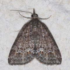 Microdes squamulata (Dark-grey Carpet) at Ainslie, ACT - 20 May 2020 by jbromilow50