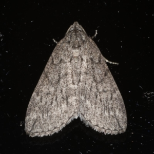 Lepidoptera unclassified ADULT moth at Ainslie, ACT - 20 May 2020
