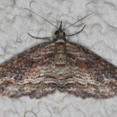 Chloroclystis filata (Filata Moth, Australian Pug Moth) at Ainslie, ACT - 22 May 2020 by jbromilow50