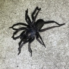 ARANEAE (TBC) at FS Private Property - 23 May 2020 by Stewart