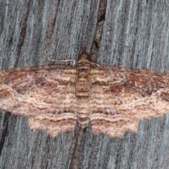Chloroclystis filata (Filata Moth) at Lilli Pilli, NSW - 28 May 2020 by jbromilow50