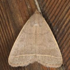 Simplicia caeneusalis (A Litter moth) at Lilli Pilli, NSW - 1 Jun 2020 by jbromilow50